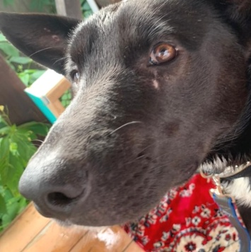 Веня- Веник - Найденные собаки