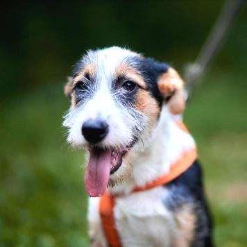 Швеппс - Собаки в добрые руки