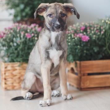 Гаммис - Собаки в добрые руки