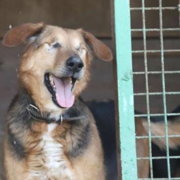 Слепой Макс - Собаки в добрые руки