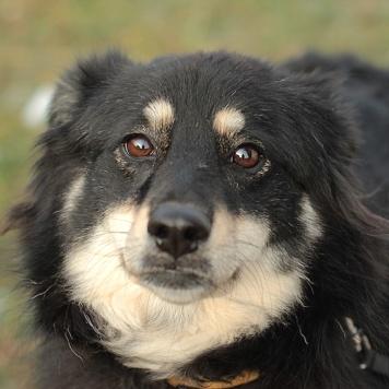 Шарлиз - Собаки в добрые руки