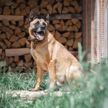 Марик - Собаки в добрые руки
