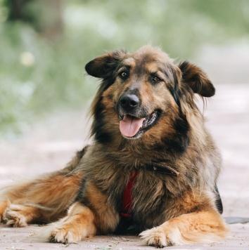 Харди - Собаки в добрые руки