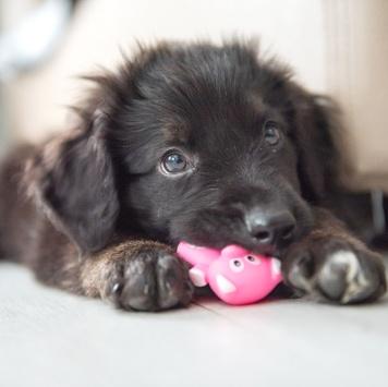 Арти - Собаки в добрые руки
