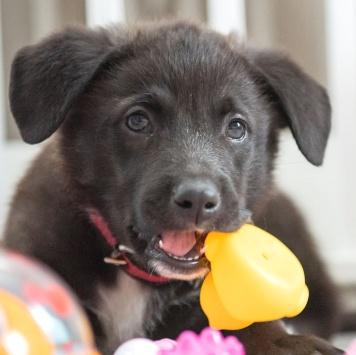 Гуфи - Собаки в добрые руки
