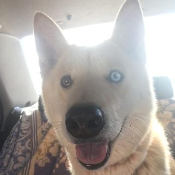 ЛИса - Собаки в добрые руки
