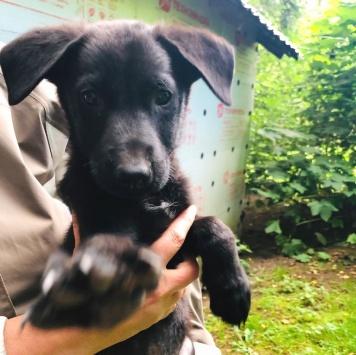 Щенятки - Собаки в добрые руки
