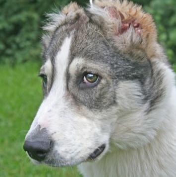 Дон - Собаки в добрые руки