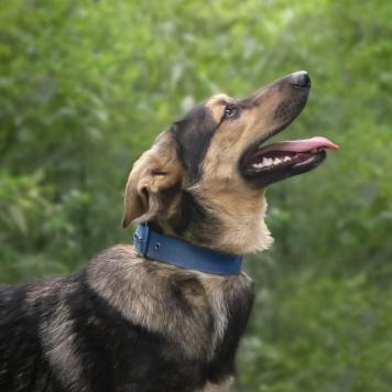 Перчик - Собаки в добрые руки
