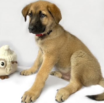 Джайпур - Собаки в добрые руки