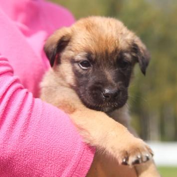 Мани - Собаки в добрые руки