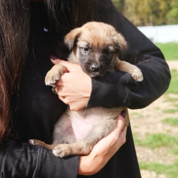 Малу - Собаки в добрые руки