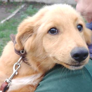 Микуш - Собаки в добрые руки