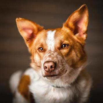 Плуто - Собаки в добрые руки