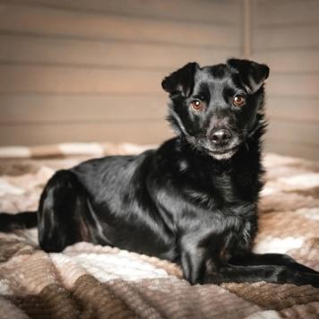 Блэк-бой - Собаки в добрые руки