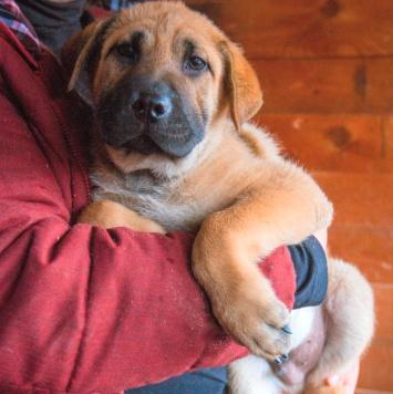 Зевс - Собаки в добрые руки
