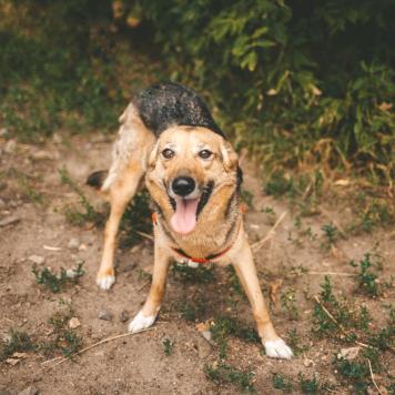 Креветка - Собаки в добрые руки