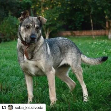 Грета - Собаки в добрые руки