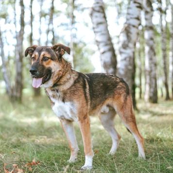 Амур - Собаки в добрые руки