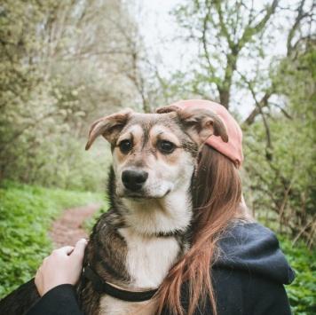 Нонночка - Собаки в добрые руки