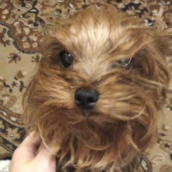 Дафи - Собаки в добрые руки