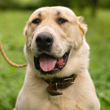 Эмилия - Собаки в добрые руки