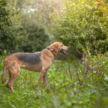 Гамма - Собаки в добрые руки