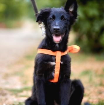 Тимоти - Собаки в добрые руки