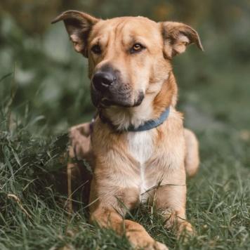 Миндаль - Собаки в добрые руки