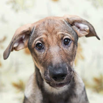 Рута - Собаки в добрые руки