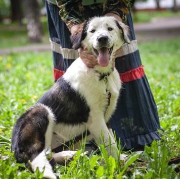 Тюлька - Собаки в добрые руки