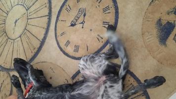 Без имени - Собаки в добрые руки