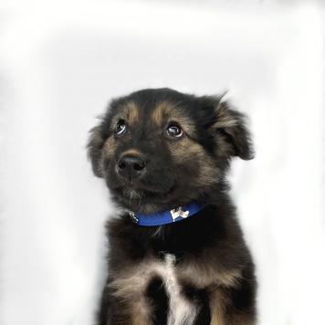 Питер - Собаки в добрые руки