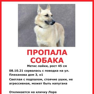 Лора - Пропавшие собаки
