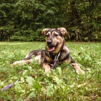 Перец - Собаки в добрые руки