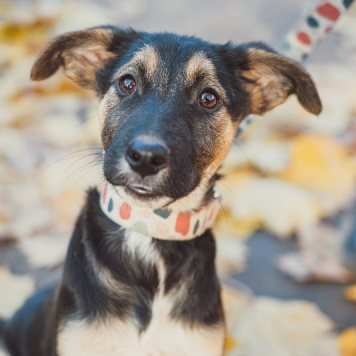Грация - Собаки в добрые руки