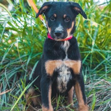 Лилуша - Собаки в добрые руки