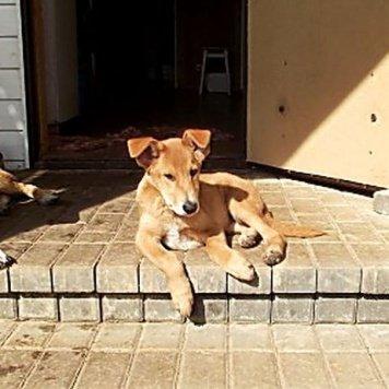 Гаврик - Собаки в добрые руки