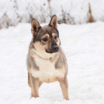 Сёма-Сёмушка - Собаки в добрые руки