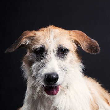 Мира - Собаки в добрые руки