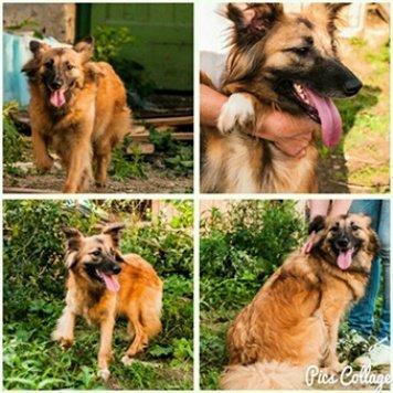 Лена - Собаки в добрые руки