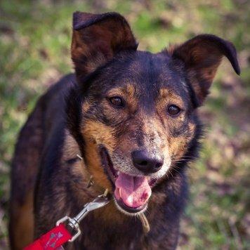 Зита - Собаки в добрые руки