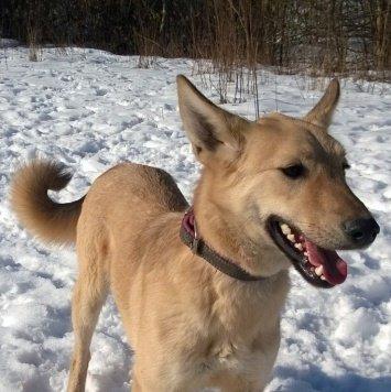 Таша - Собаки в добрые руки