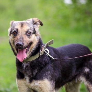 Касси - Собаки в добрые руки
