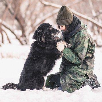Чукча - Собаки в добрые руки