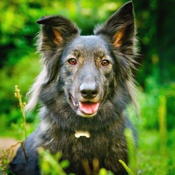 Журавлик - Собаки в добрые руки