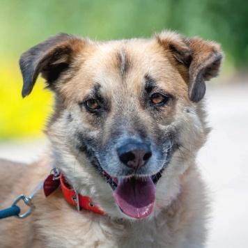 Витёк - Собаки в добрые руки
