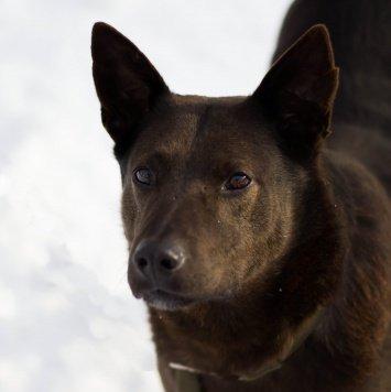 Бурбон - Собаки в добрые руки