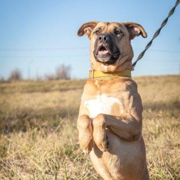 Ворд - Собаки в добрые руки