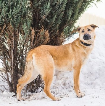Изумруд - Собаки в добрые руки